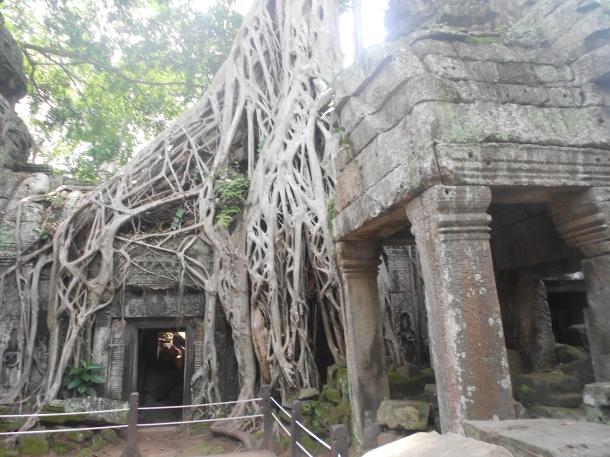 Angkor Wat Cambodia Ta Prohm