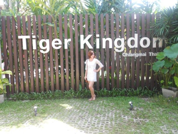 Tiger Kingdom, Chiang Mai, Thailand